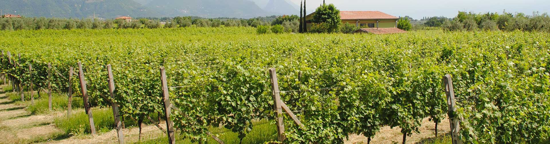 Oggi Gallery La Meridiana Azienda Agricola Puegnato del Garda Brescia